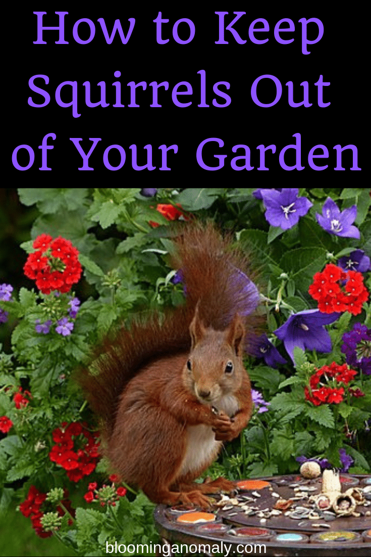 How to keep squirrels out of your garden blooming anomaly - How to keep squirrels away from garden ...