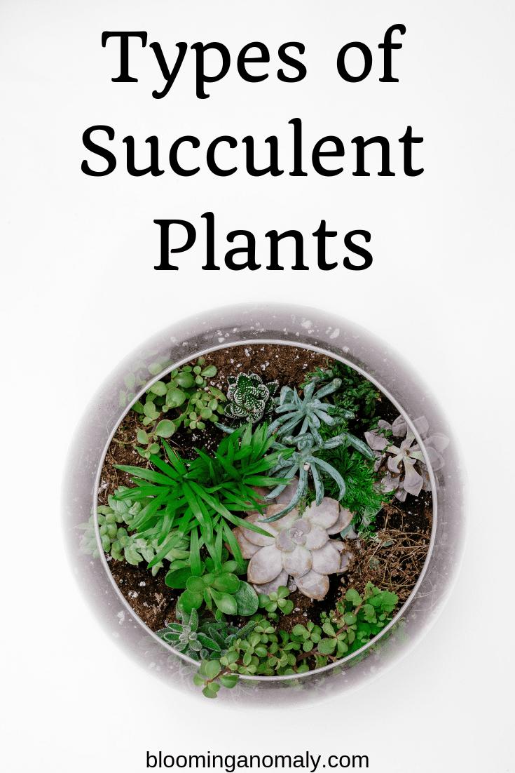 types of succulent plants, succulent plants