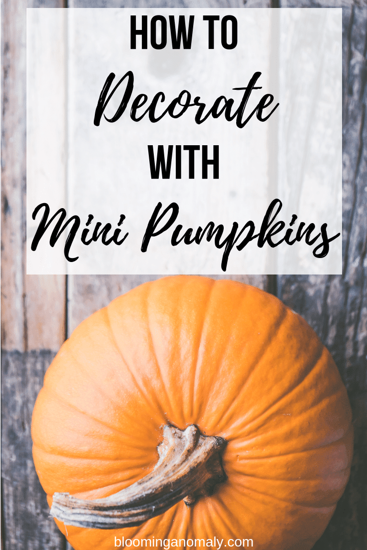 how to decorate with mini pumpkins