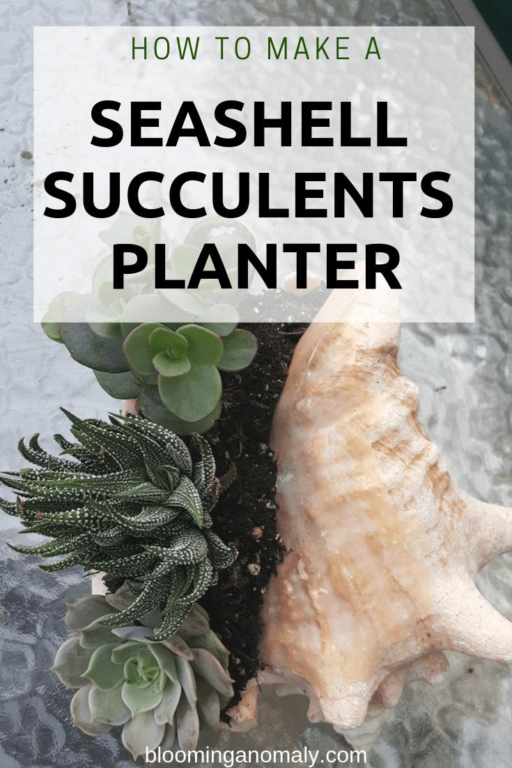 seashell succulents planter, succulent planter, succulents