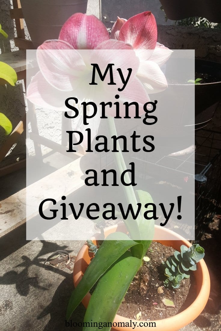 My spring plants, giveaway