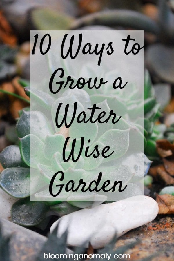 grow a water wise garden, how to grow a water wise garden, water wise garden, succulents