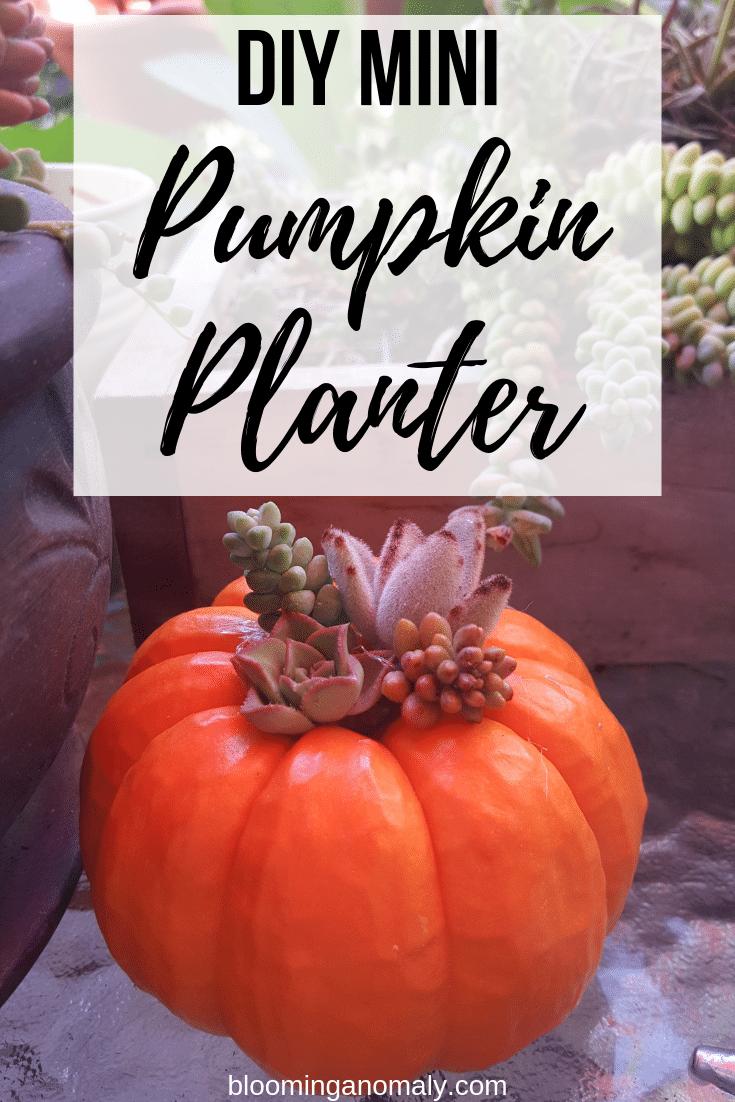 diy mini pumpkin planter, succulent planter