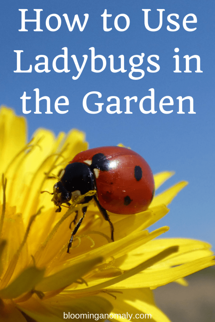 how to use ladybugs in the garden, ladybugs