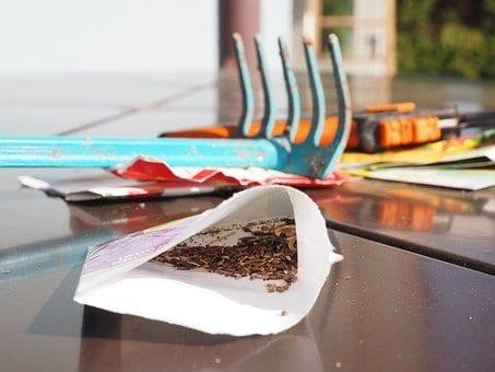 Five of the Best Places to Buy Seeds, burpee seeds, vegetable seeds, flower seeds, heirloom seeds