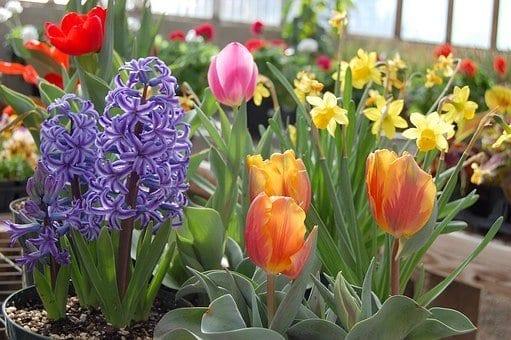 how to grow bulbs, flower bulbs