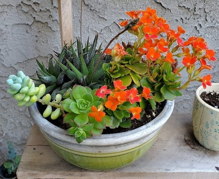succulent arrangements, how to make succulent arrangements, succulents, succulent plants, succulent garden