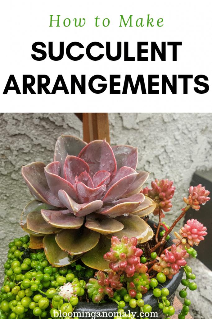 succulent arrangements, how to make succulent arrangements, succulents, succulent plants, succulent garden, succulent care