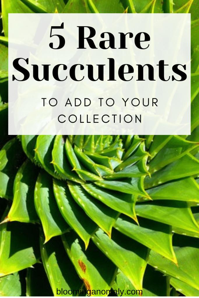 rare succulents, succulents, your collection