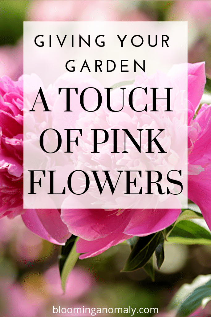 pink flowers, giving your garden a touch of pink flowers, pink flower