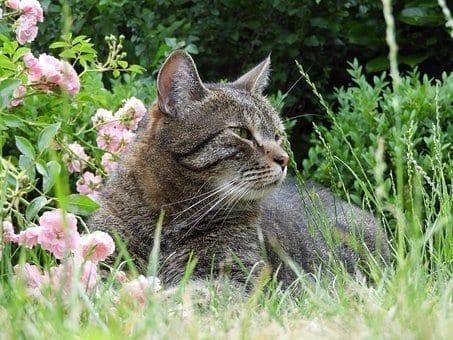 Get The Most Attractive Home In The Neighborhood, garden cat