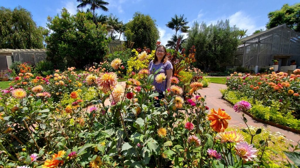 sherman library and gardens, corona del mar, dahlias