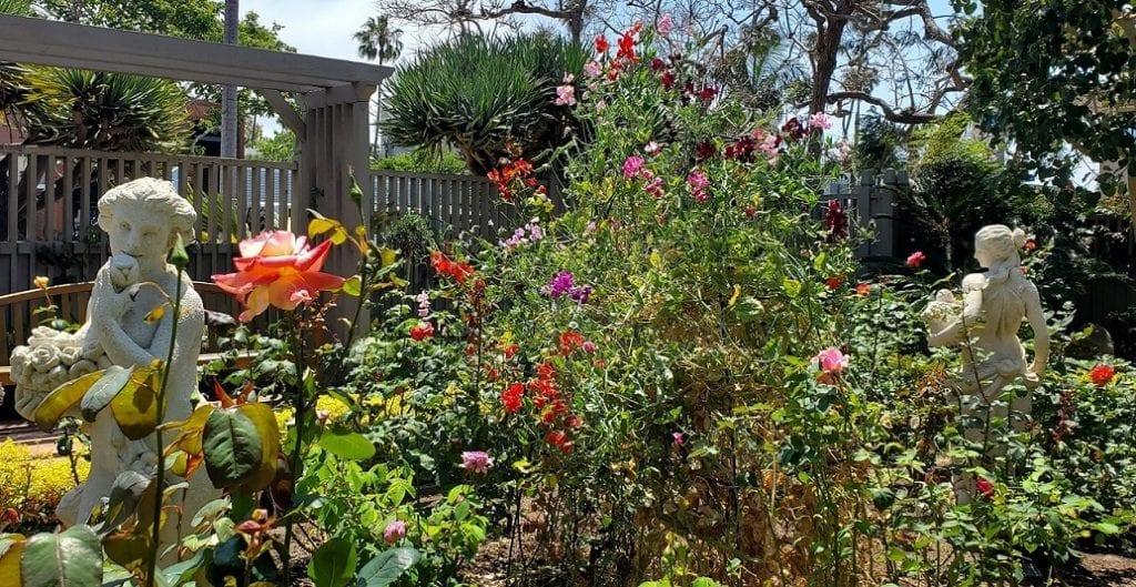 rose garden, roses, sherman library and gardens