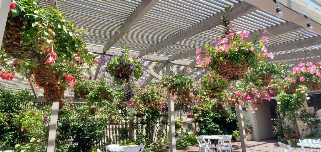 sherman library and gardens, tea garden, fuchsias, hanging plants