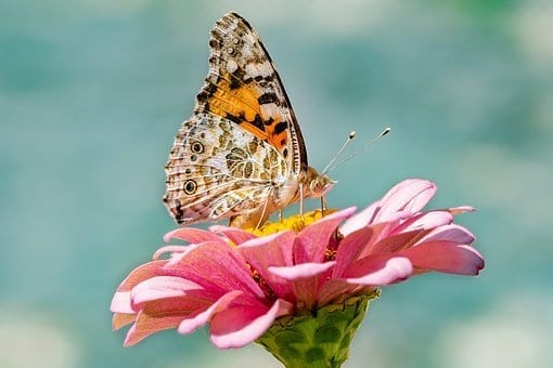budget planning, butterfly, flower, pink flower