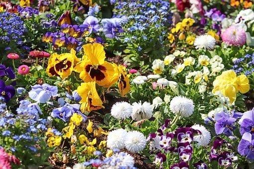 flowers, gardening