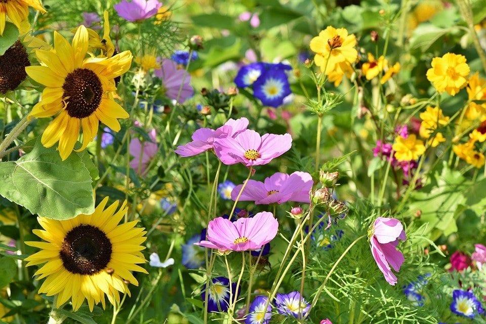 new garden flowers