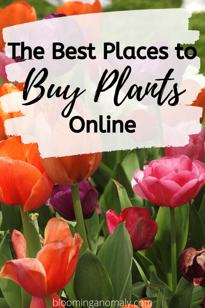 the best places to buy plants online