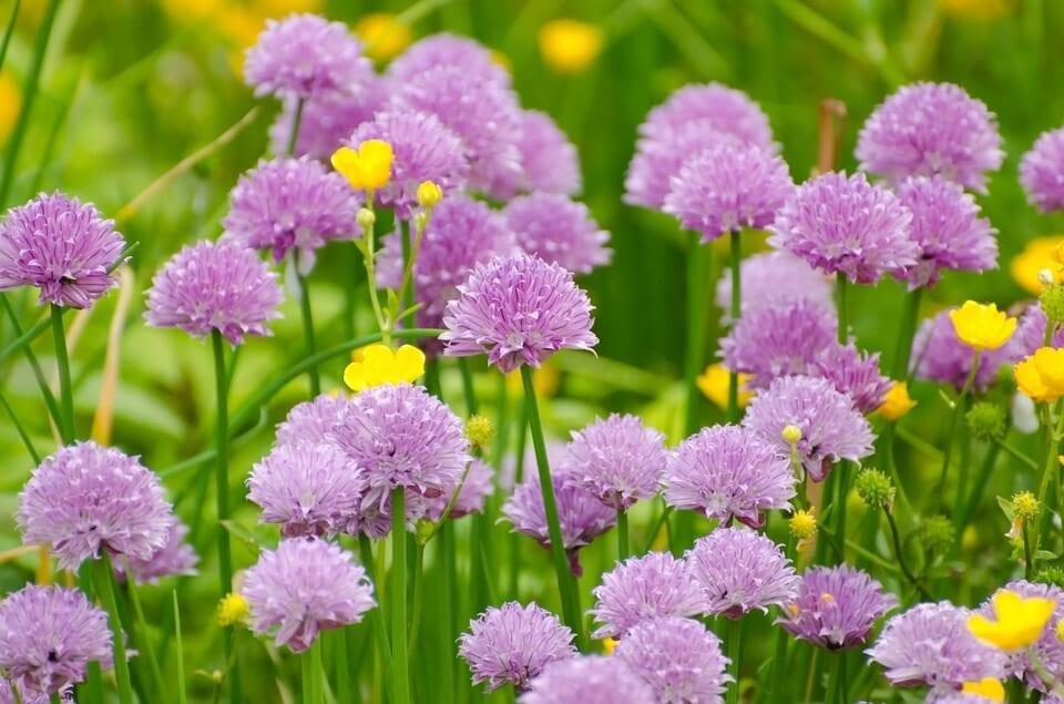spring flowers buy online