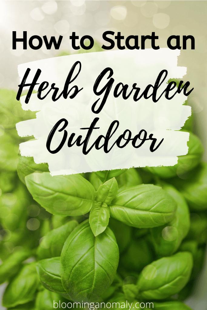 how to start a herb garden outdoor