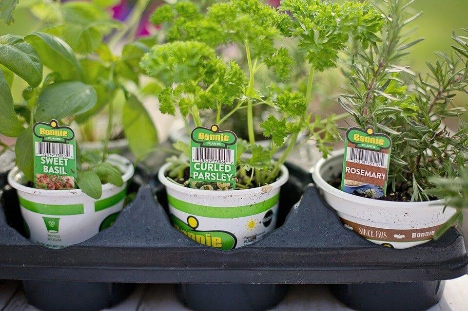 herb garden outdoor